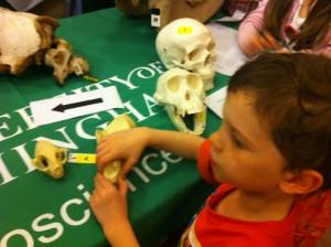 Skulls and bones quiz