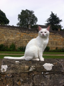 White cat at Snowshill Manor
