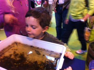 Pond dipping at Gardener's World Live