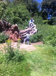 On a fallen tree in Clent Hills