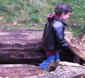 playing with old tree trunks
