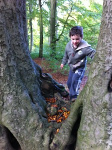 Climbing through a twin trunk tree