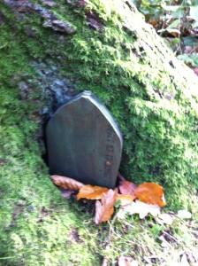 Fairy Door: Little Door in a Tree