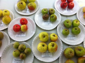 Apple Display at Birmingham Botanical Gardens