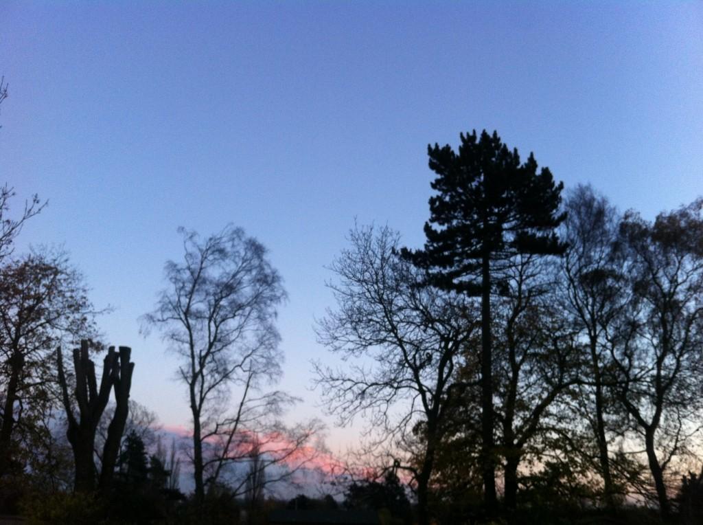 Dawn pink sky
