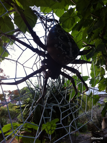Real life giants spider - photo#27