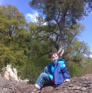 tree climbing at Dudmaston, National Trust