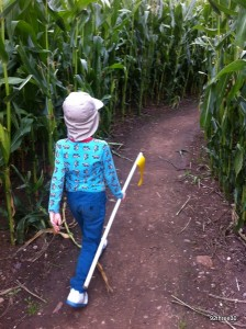 adventuring through the maize