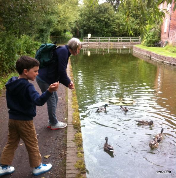 ducks by the Ironbridge tar tunnel