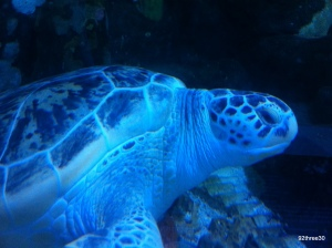 turtle at national sea life centre birmingham
