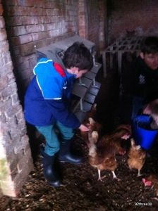 chicken feeding time