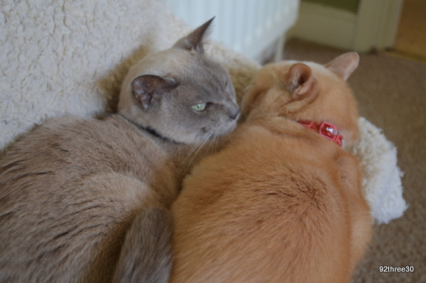 sleeping together cats