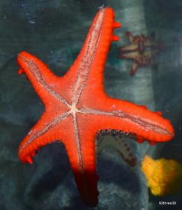 sea stars at Birmingham sea life centre