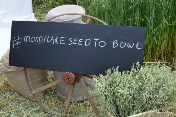 mornflake seed to bowl
