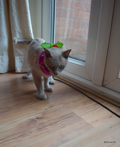 making a cat collar