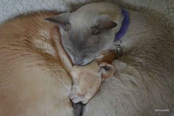 snuggling up