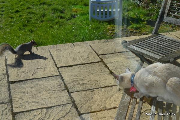 grey cat and grey squirrel