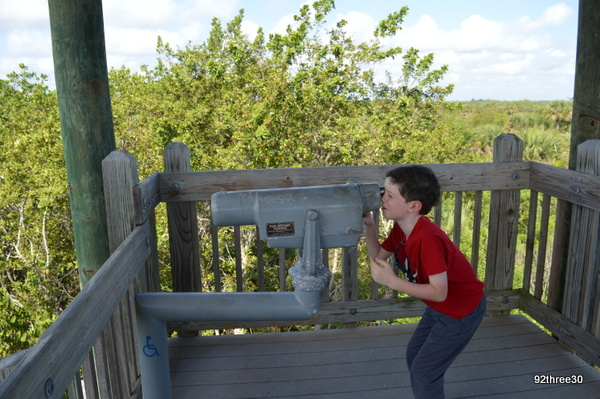 pelican island viewing point