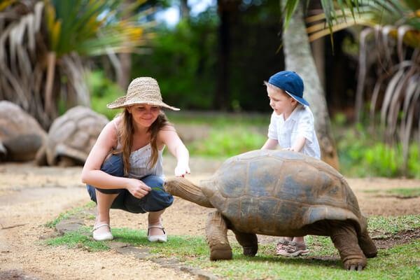 giant tortoises mauritius