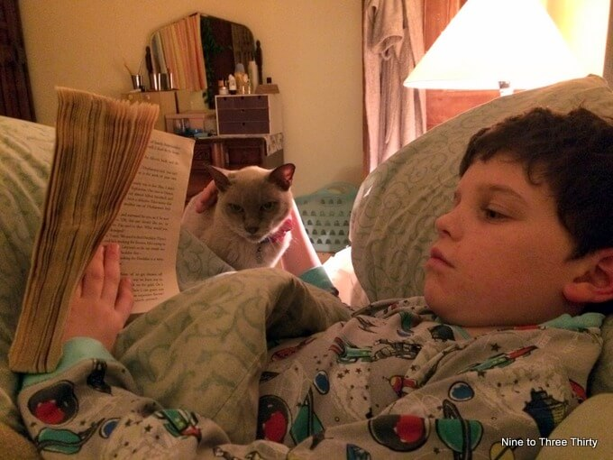 cat with boy reading in bed