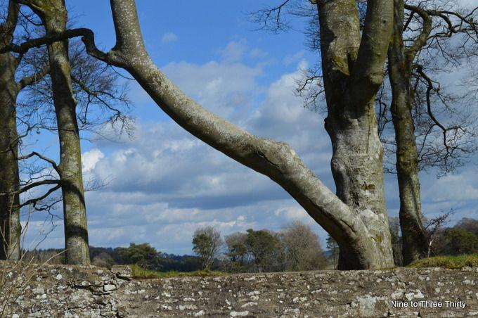 trees near the churchyard