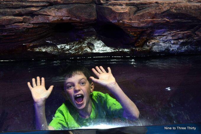 tunnel at sealife