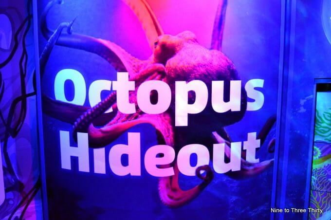octopus sealife birmingham