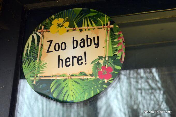 spottiing the zoo babies