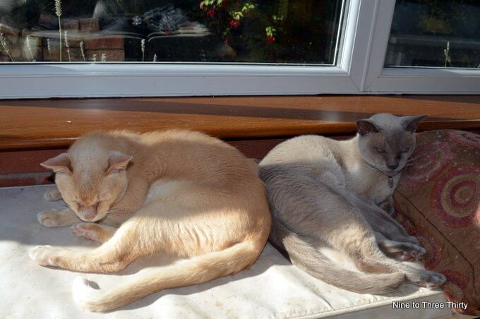 cats sunning themselves