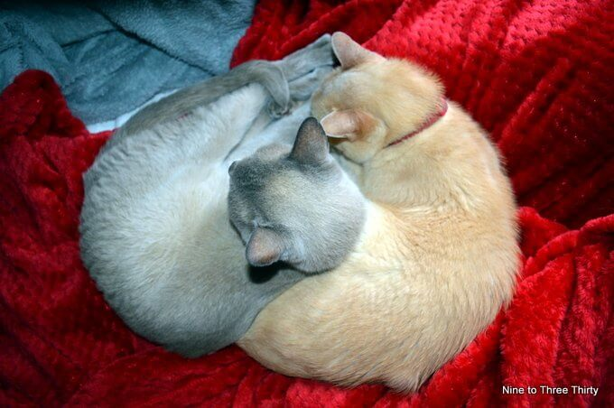 cats sleeping on soft things