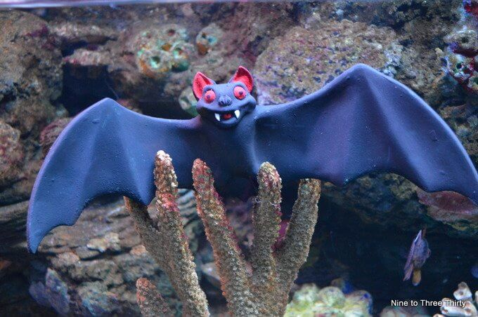 bat in a sea life tank