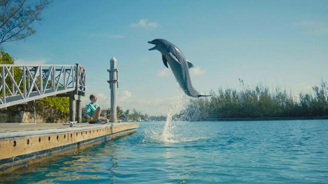 dolphin film