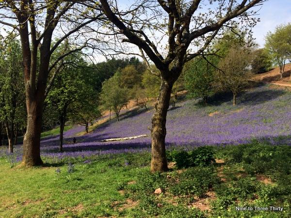bluebells clent hills