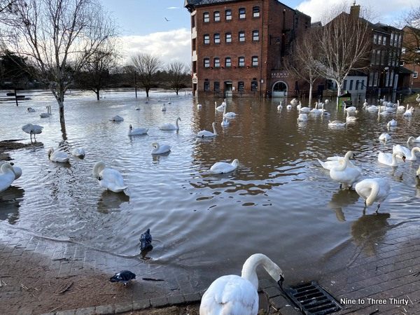 swans at worcester