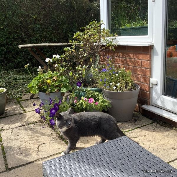 cat in garden
