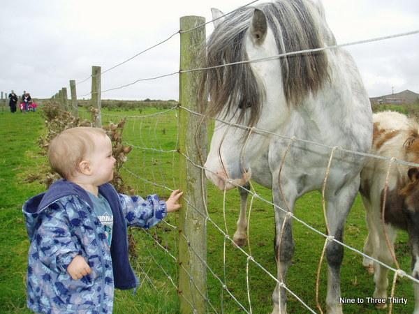 visiting a farm horses