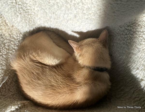 cat in cats cradle